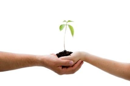 holding seedling