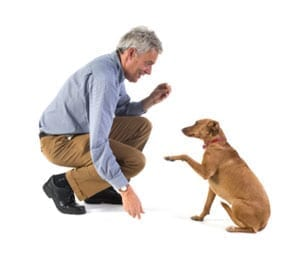 Man teaching dog